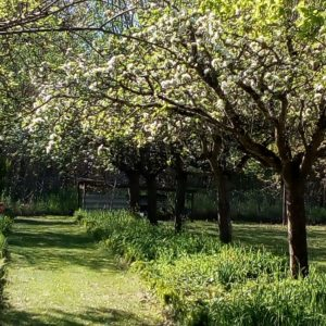 Au jardin de grand-père.